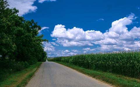 玉米,树,路,篱笆,绿色,路径,草