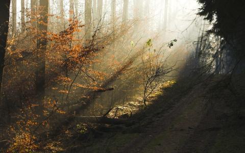 秋天,树木,森林,阴霾,早上,光线