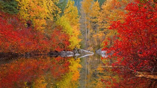 森林,秋天,油漆