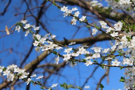 春天,开花