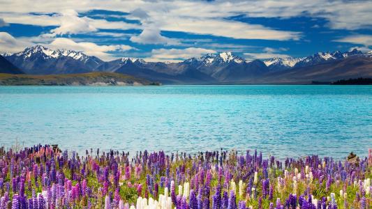湖,特卡波,新西兰,特卡波湖,新西兰,大自然