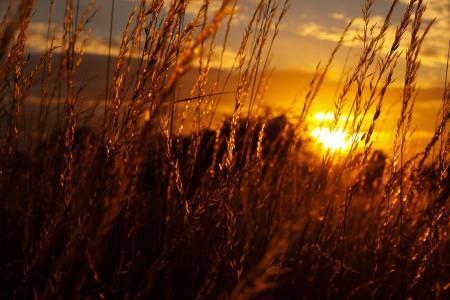 日落,灌木,眩光,美丽的视角
