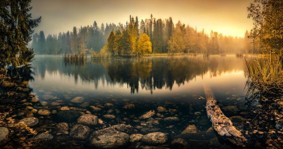 自然,池塘,湖,秋,美丽,雾,森林