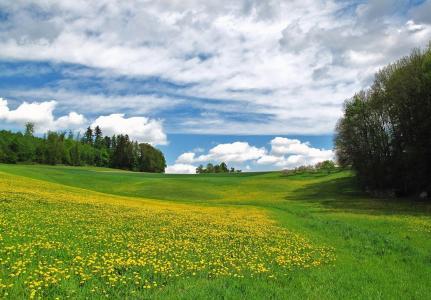 场,森林,天空,云,鲜花,绿党,美女,夏天