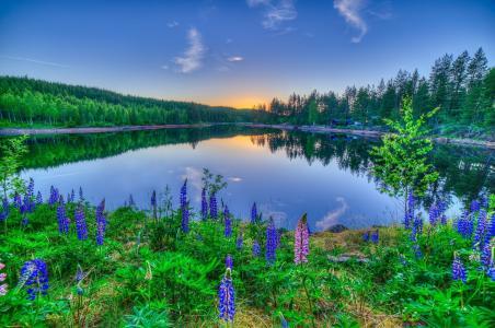 湖,日落,反射,花,羽扇豆