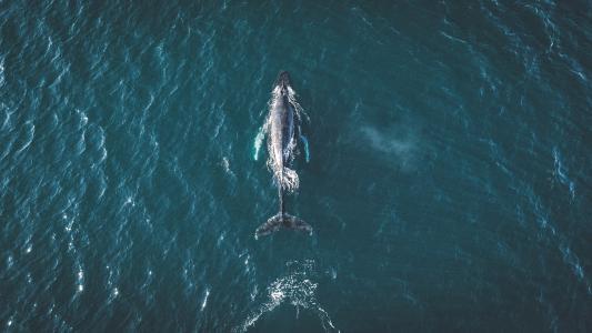 海洋,鲸鱼,冰岛