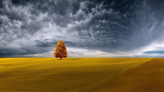 性质,场,地平线,树,天空,云,艺术
