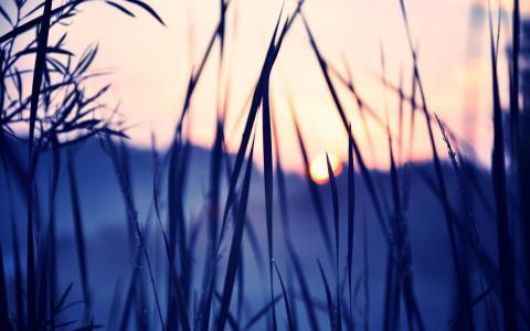 冬天,黎明,草地