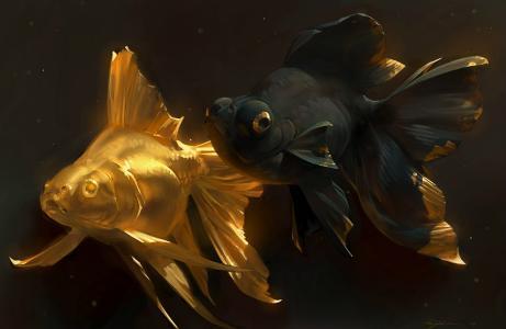 金鱼,黑色,金色