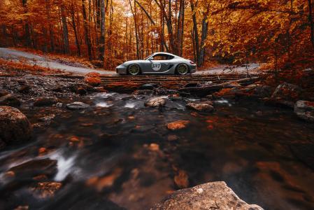 保时捷,森林,秋天,石头,开曼群岛