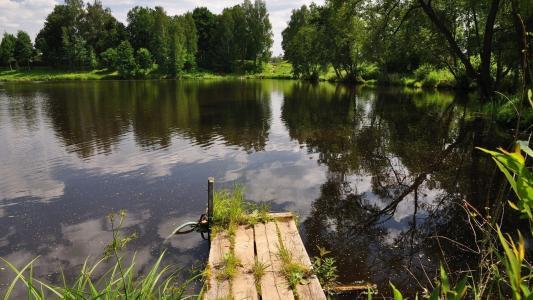 池塘,树木,桥梁