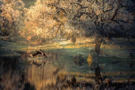 泰丰,自然,池塘,树木,石头,鸟,鸭子,早上