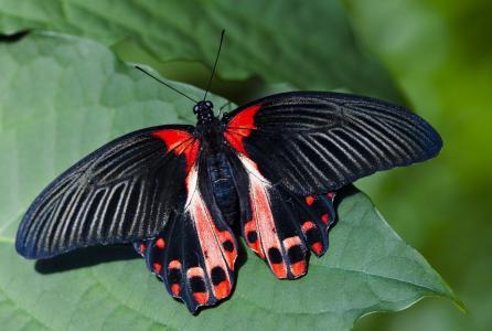 动物,蝴蝶,明亮,杂色,翅膀