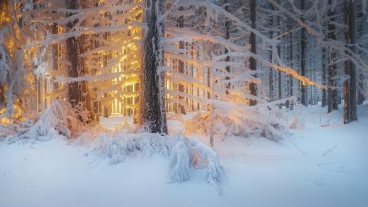 自然,冬天,雪,森林,树木