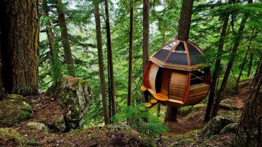 森林,自然,山,家和舒适