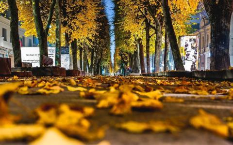 城市,秋天,胡同