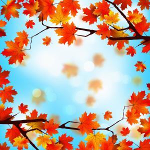 秋天,叶子,艺术