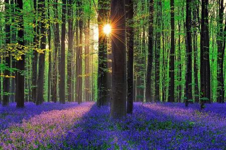 自然,光,太阳,森林,树木,春天,封面,鲜花,紫罗兰色,钟声,美丽