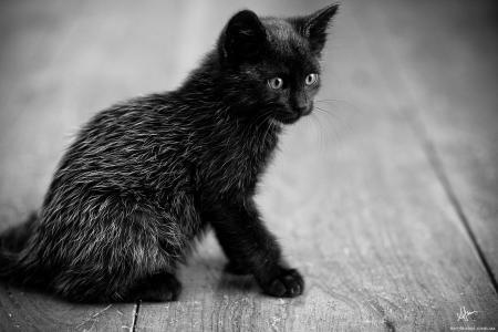 小猫,黑色,坐,看