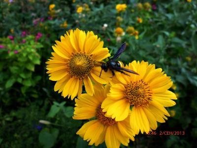 夏天,花,飞