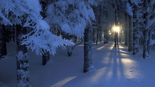 冬天,雪,森林,树木,树枝,太阳,光辉,光