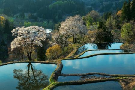 自然,种植园,山,亚洲