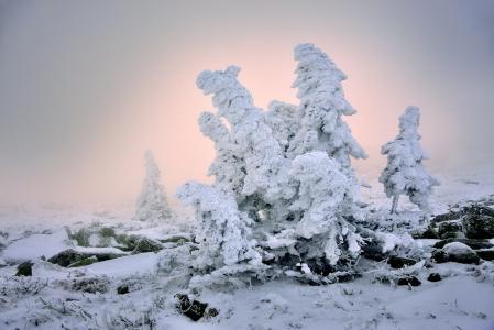 冬天,树木,雪,光,Klekovkin阿列克谢