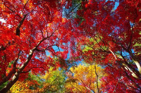秋天,叶子,树木,性质,天空