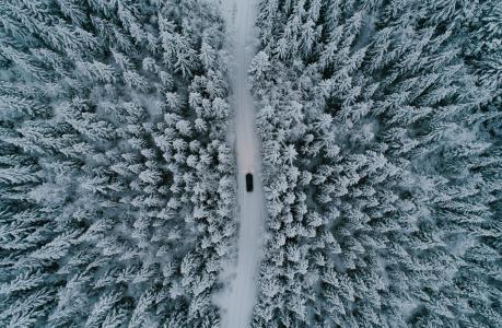冬季,森林,雪,路,车,查看,顶部