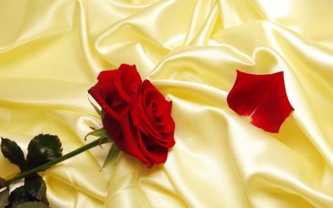 玫瑰,丝绸