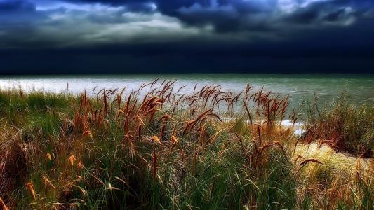 云,羽毛草,水,天气