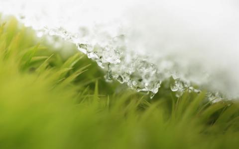 草,雪,滴,春天