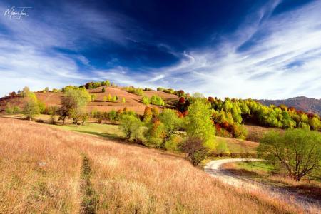 田地,丘陵,树木,天空,油漆,秋天,马吕斯Turc