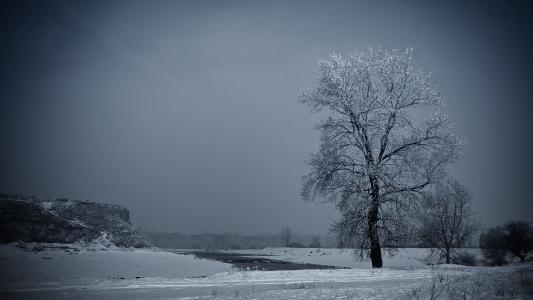 冻结,树,雪,冰,河,冬天
