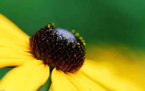 花,黄色,绿色,背景,宏