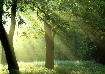 阳光,绿树,树木,自然,太阳,森林,光线,森林