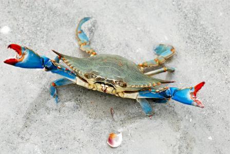 螃蟹,沙子,位置,侵略