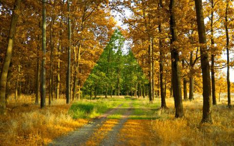 夏天,秋天,森林,树木,路