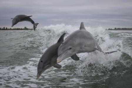 海豚,海,喷雾