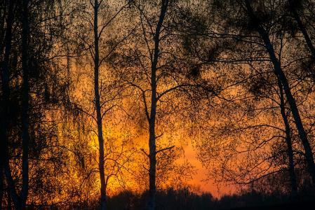 秋天,森林,裸体,晚上,日落,黎明,火