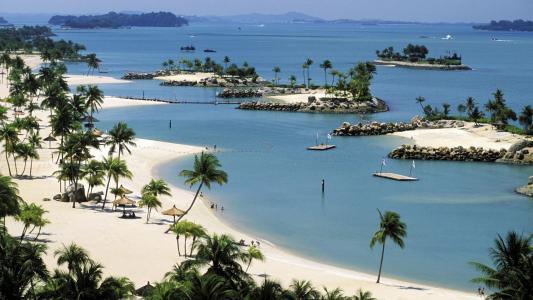 海,岛屿,海滩,棕榈树,休息,烘烤