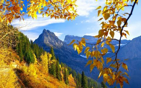树枝,黄叶,山