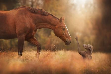 马,狗,朋友,宏,照片,性质,积极
