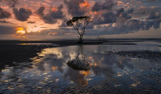 澳大利亚,昆士兰州,天空,云,云,树,水,思考,晚上,丽齐摄影