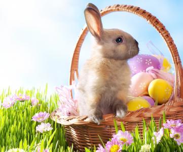 复活节,鲜花,鸡蛋,草,复活节,假期