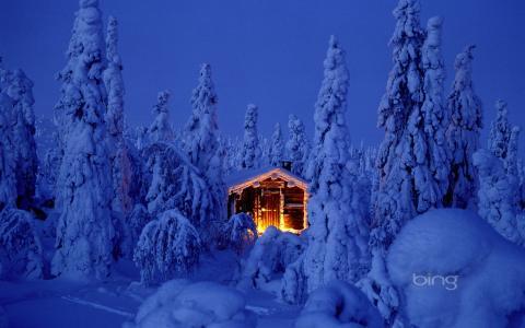 性质,冬天,森林,房子,光,冷杉,冰,照片,雪,霜,晚上