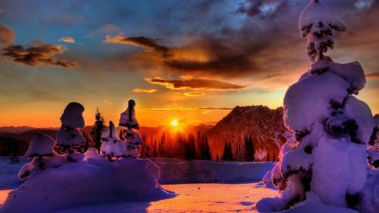 冬天,雪,冷杉,森林,日落