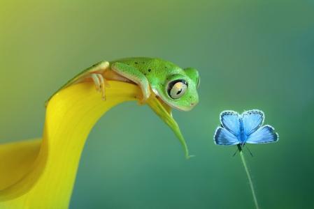 青蛙,蝴蝶,背景