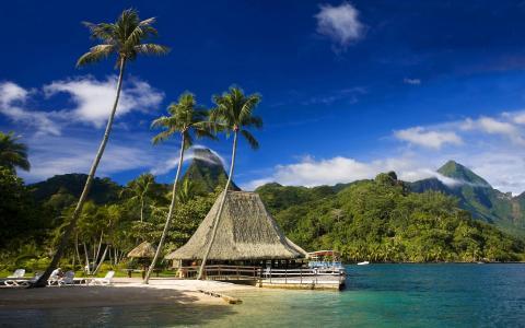 莫雷阿岛,热带地区,taiti,热带海滩,咖啡馆,大溪地,海滩,棕榈树