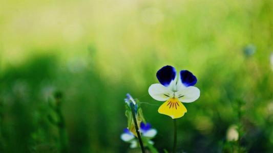 美丽的花,由领域的花